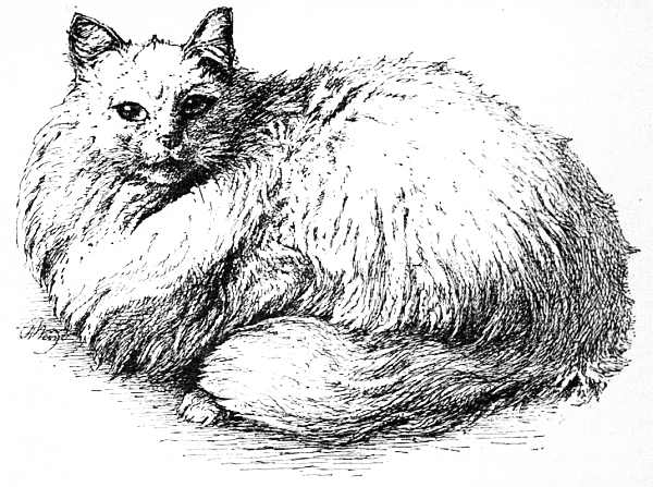Fluffy the cat